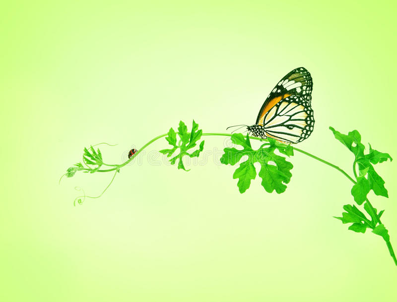 The green creeping plant with butterfly and ladybug on green background royalty free stock photos