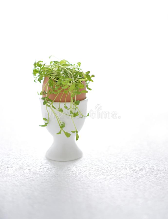 Green cress in egg shell stock photography
