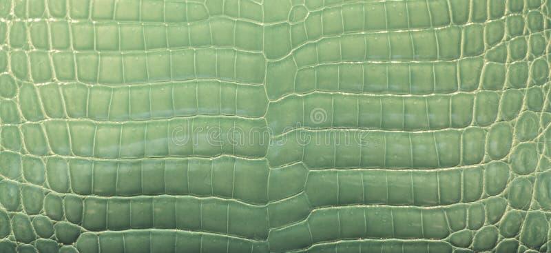 Green Crocodile Skin stock image