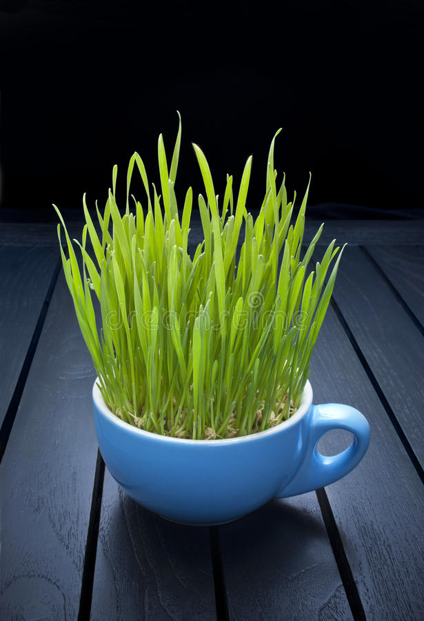 Green Organic Food Wheatgrass. A cup of wheatgrass on a black background stock photos