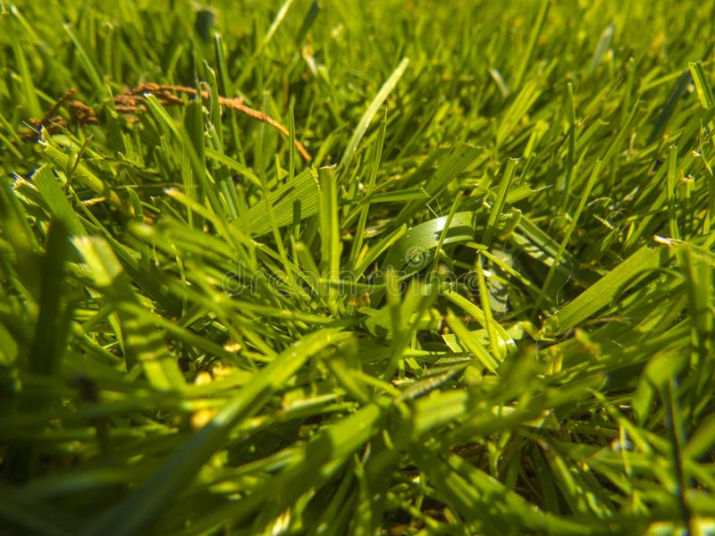 Download Green cut grass in spring. stock photo. Image of meadow - 117510084