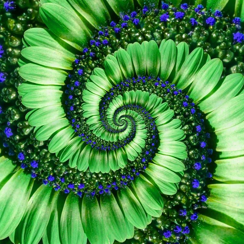 Green daisy flower spiral abstract fractal effect pattern background. Green navy flower spiral abstract pattern fractal. Incredibl. E flowers pattern round stock image