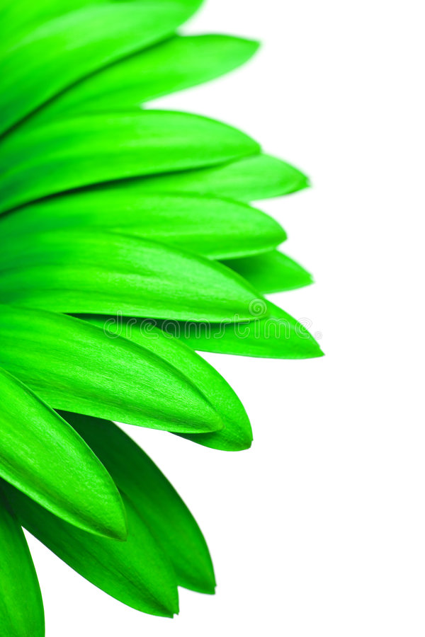 Download Green Daisy Isolated On White Stock Image - Image: 7166253