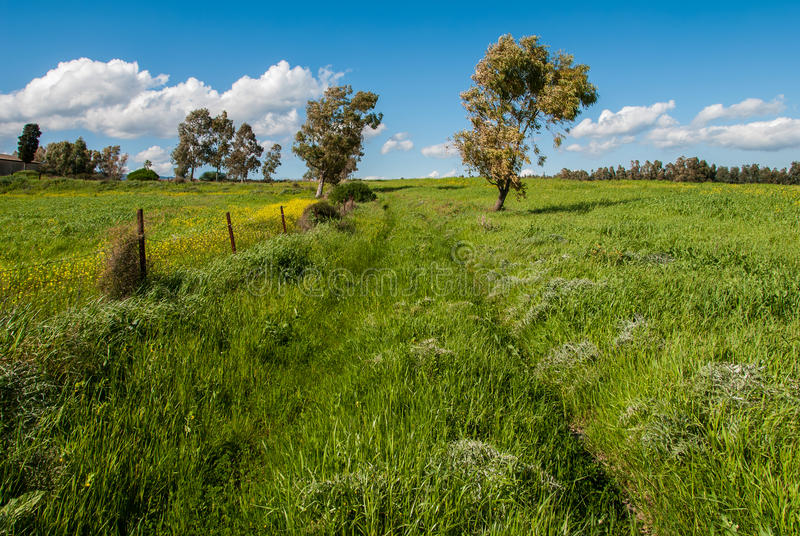Download Green day stock image. Image of meadow, field, colorful - 33819595