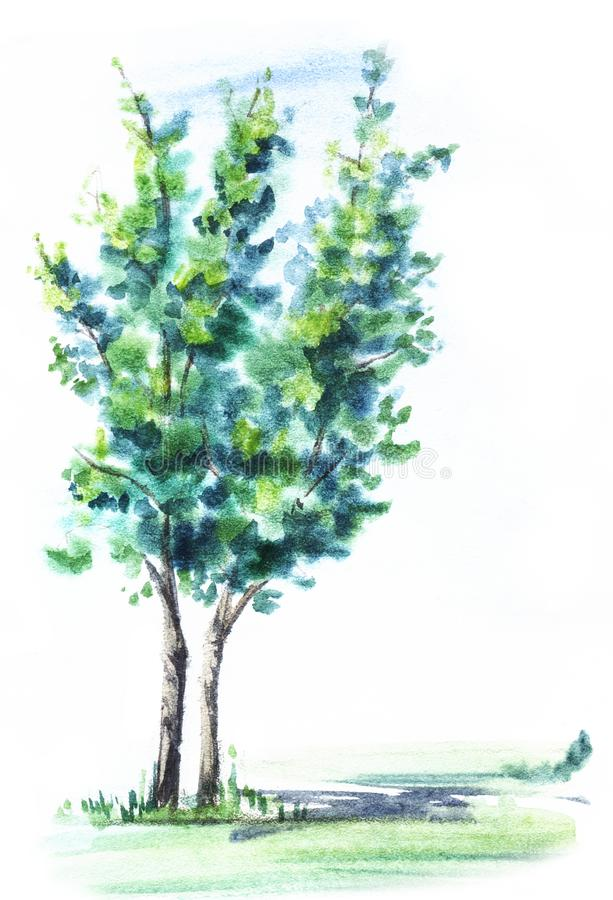 Green deciduous tree with two thin trunks. Blurred illustration on wet paper. Hand drawn.  vector illustration