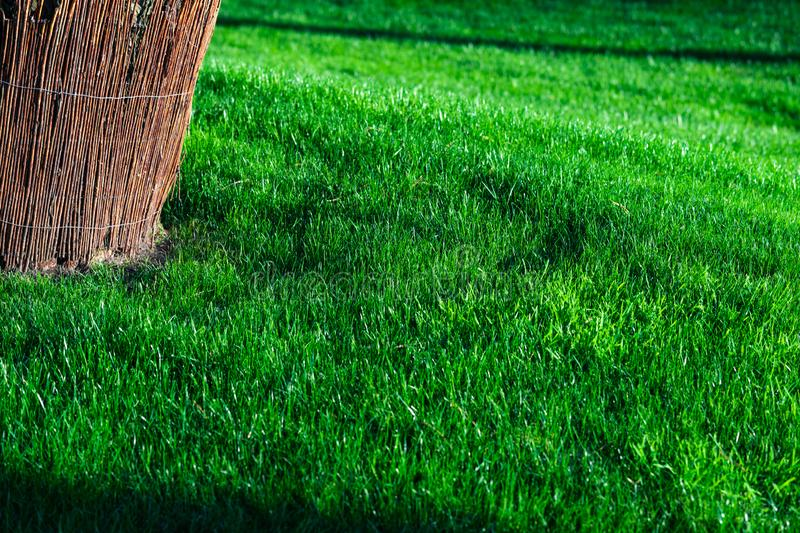Green decorative garden. Neutral landscape with a green field. Landscape park. royalty free stock photography