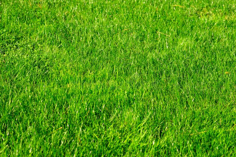 Green decorative garden. Neutral landscape with a green field. Landscape park. stock images