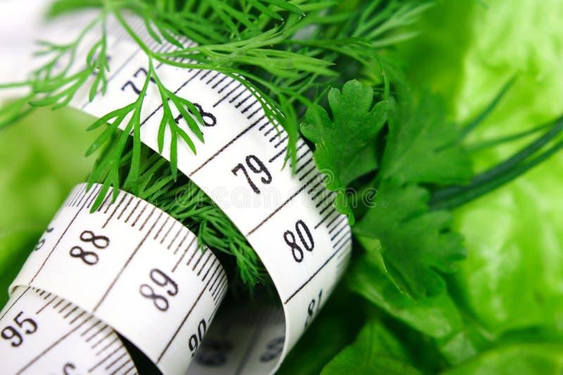 green diety obrazy stock