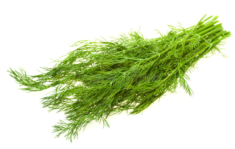 Green dill on white stock photography