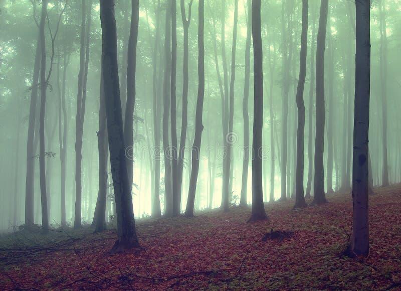 Green dimma i en härlig skog royaltyfri foto