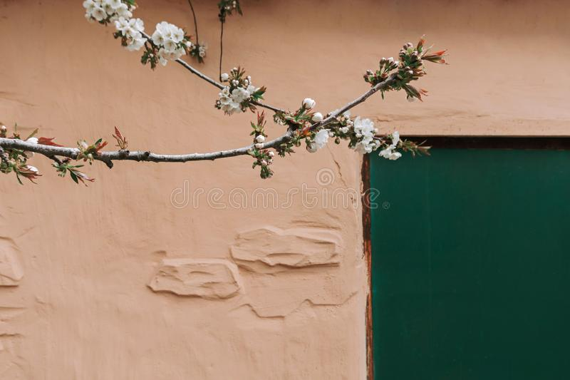 Green door in yellow stone wall and branches with white bloom royalty free stock photography