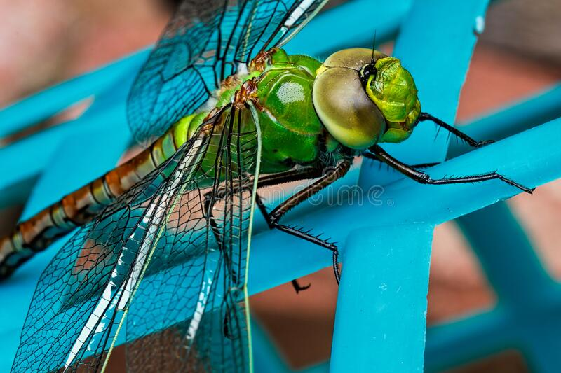 Green Dragonfly Free Public Domain Cc0 Image
