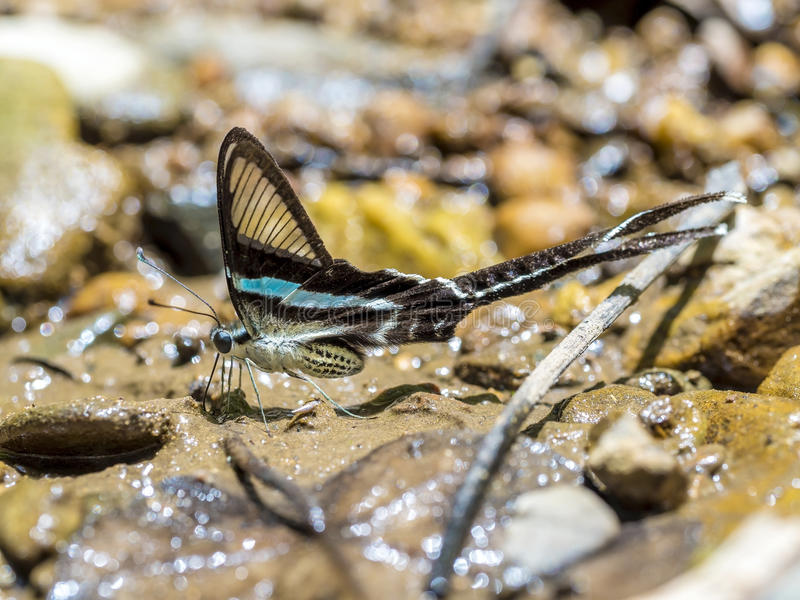 (Green Dragontail) Beautiful butterfly wings on ground stock images