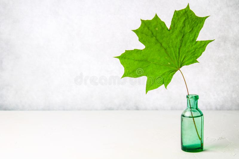 A green dried maple leaf in an antique glass bottle on a light background. royalty free stock photography