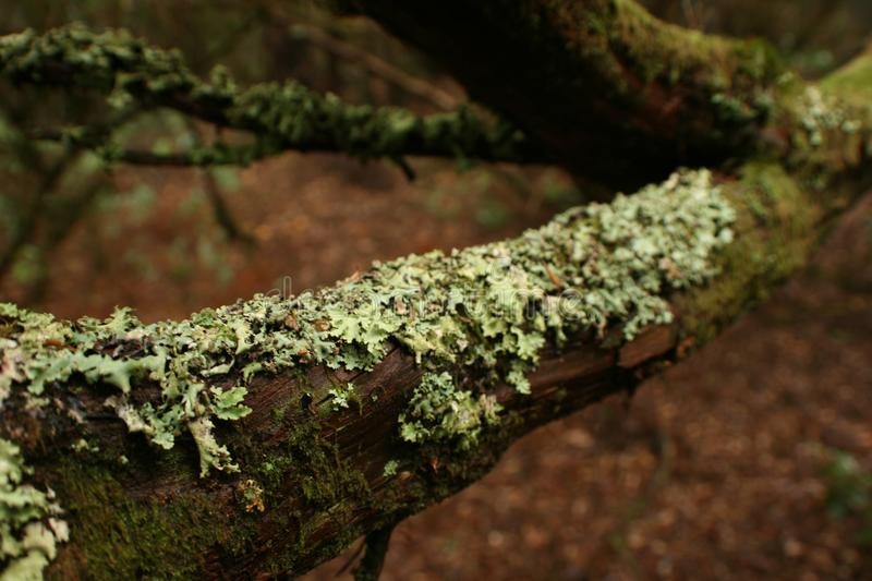 Dry moss stuck to the branch stock photography