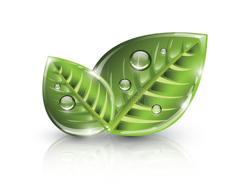 Green eco leaves royalty free illustration