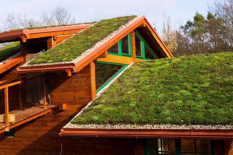 Green living roof on wooden building covered with vegetation. Green ecological sod roof on wooden building covered with vegetation mostly sedum sexangulare, also royalty free stock image