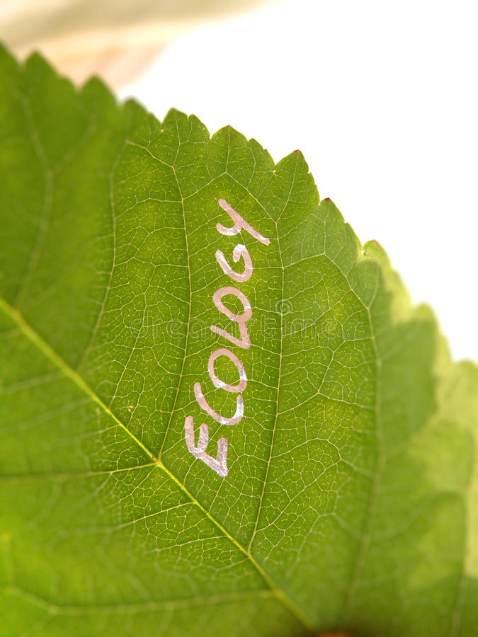 Download Green ecology leaf stock photo. Image of details, ecology - 14937344