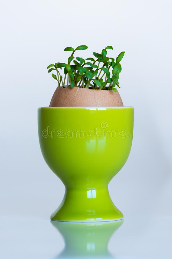 Green egg cup with eggshell growing cress royalty free stock photography