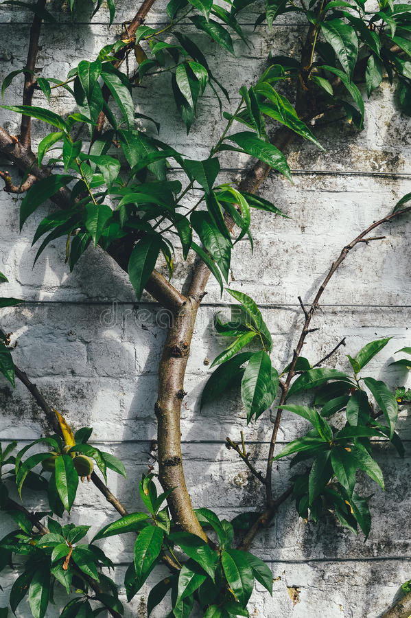Green Eleptical Leaf Plant Growing Beside Gray Concrete Wall
