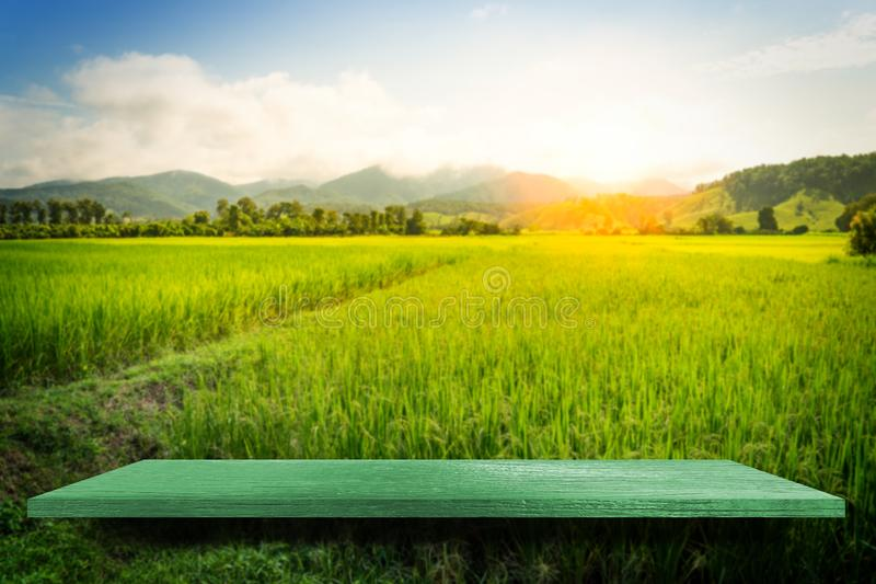Green Empty shelf counter Farm Paddy Nature background stock photography