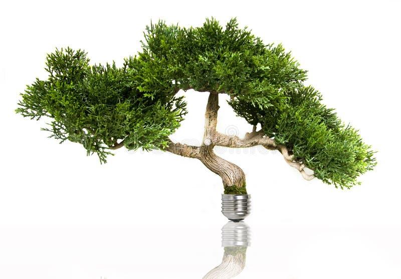 Green energy. Tree in light bulb symbolizing green energy stock photo