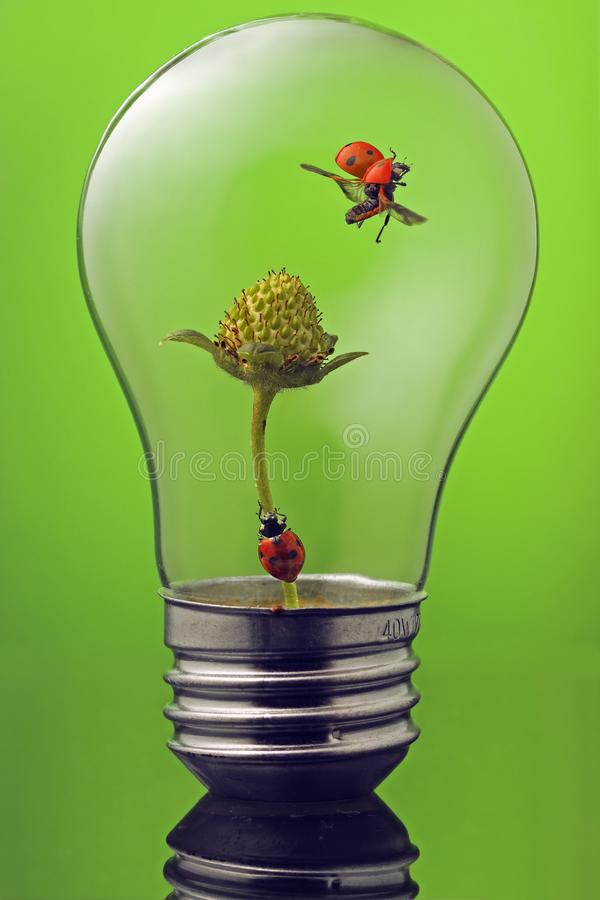 Green concept with two ladybugs in lightbulb. Green energy needed - two ladybugs inside an empty lightbulb stock photos