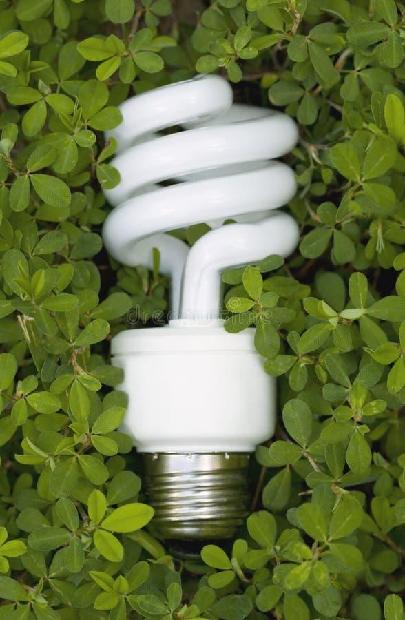 Free Green Energy Saving Light Bulb Stock Images - 5462804