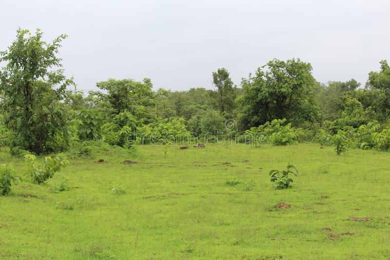 Green environment and picnic spot,. Green trees in lavish garden Indian Kolad picnic spot new beautiful river stock image