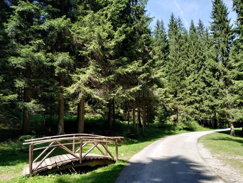 Green evergreen forest next to a concrete path and small wooden bridge on a sunny summer spring day stock photography