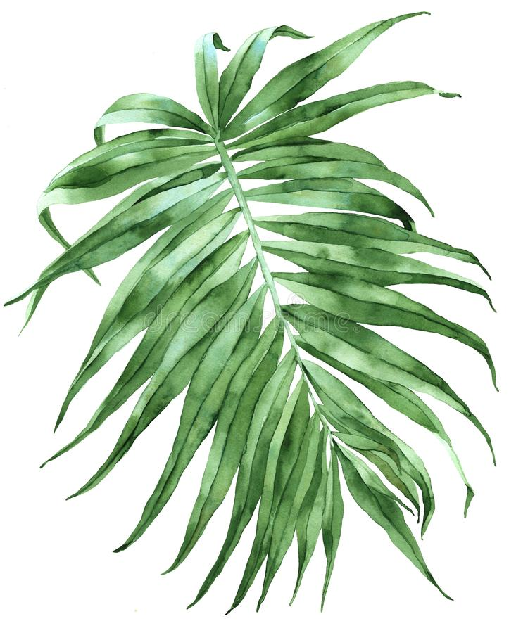 Green palm leaf illustration stock image