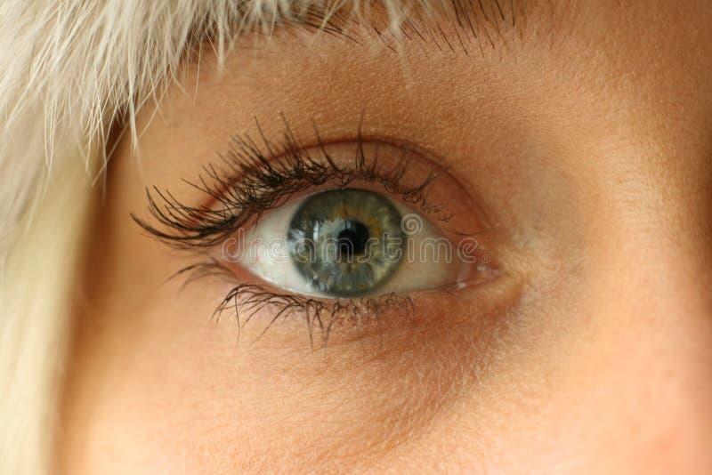Green eye stock photos