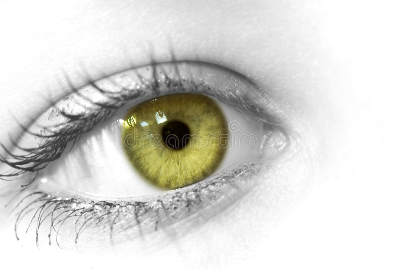 Green eye stock images