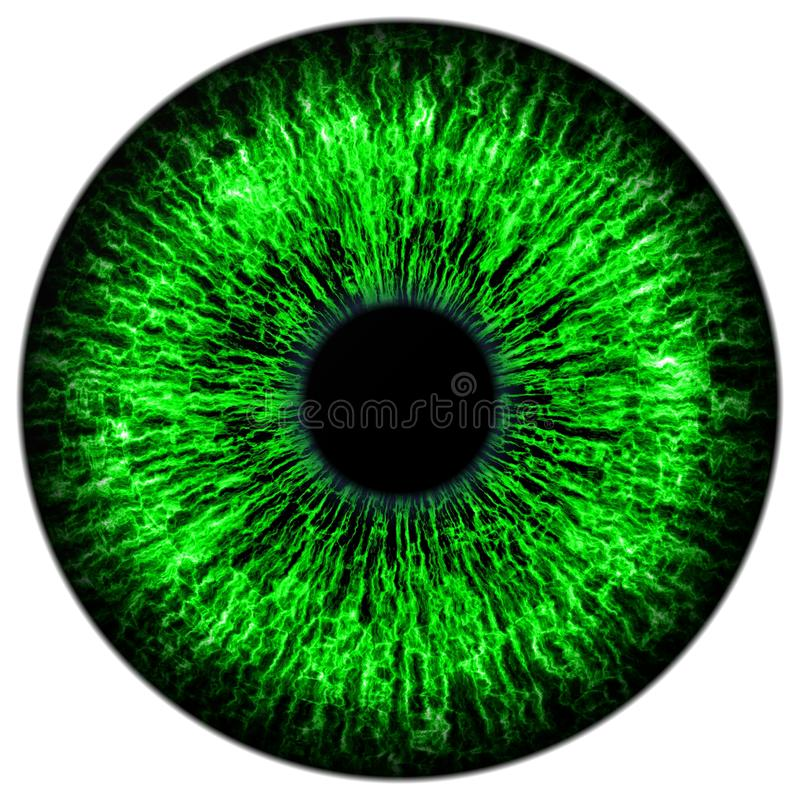 Green eye stock illustration