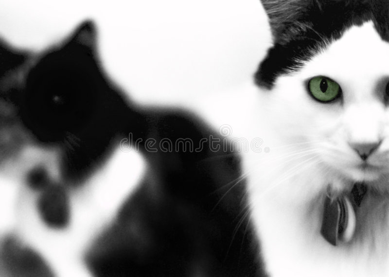 Download Green Eyed Cat stock image. Image of pets, green, black - 720187