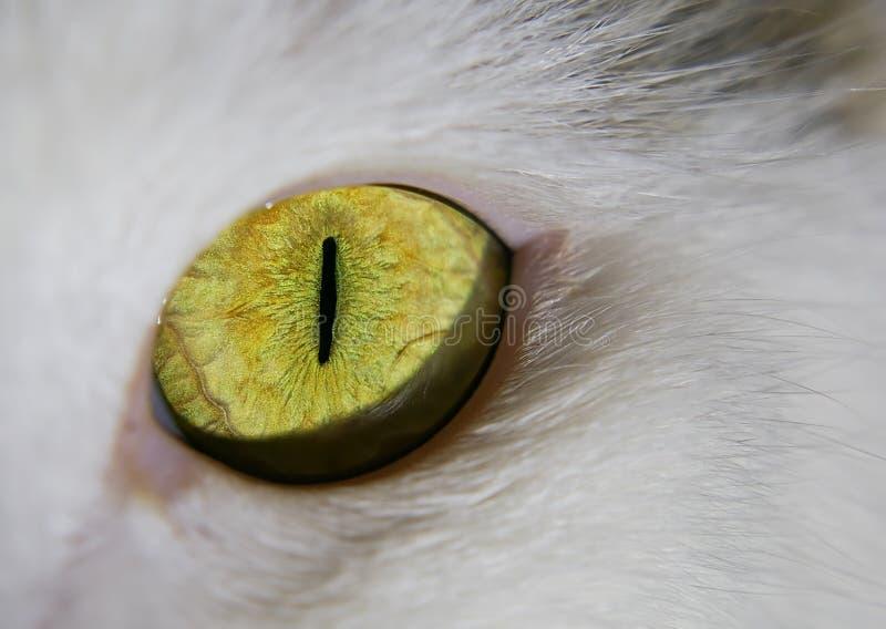Download Green-eyed cat stock photo. Image of mammal, macro, animal - 7301868