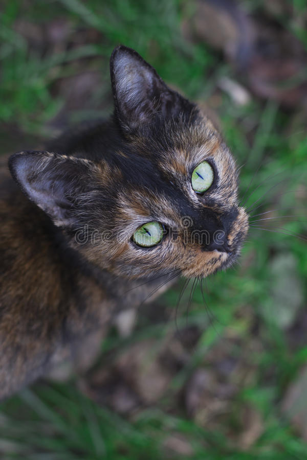 Green-eyed cat looking up stock image