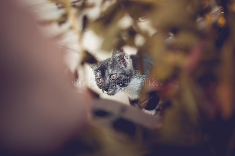 Green Eyed kitty stock photo