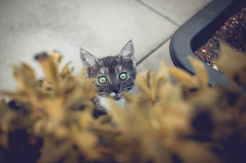 Green Eyed kitty stock photos