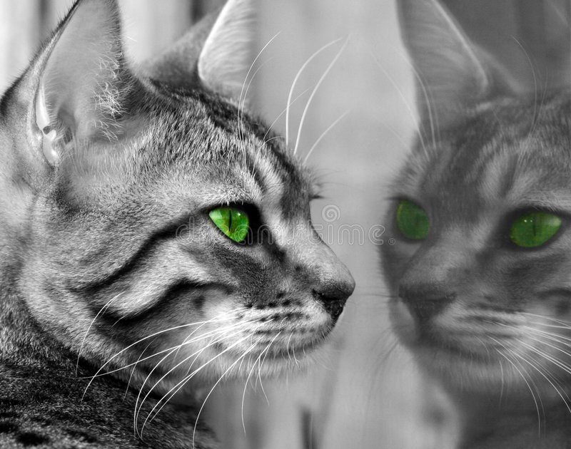 Green Eyed Monster stock photography