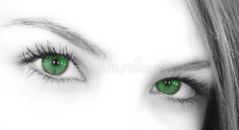Green Eyes. Beautiful green enchanting eyes staring right at you stock photos