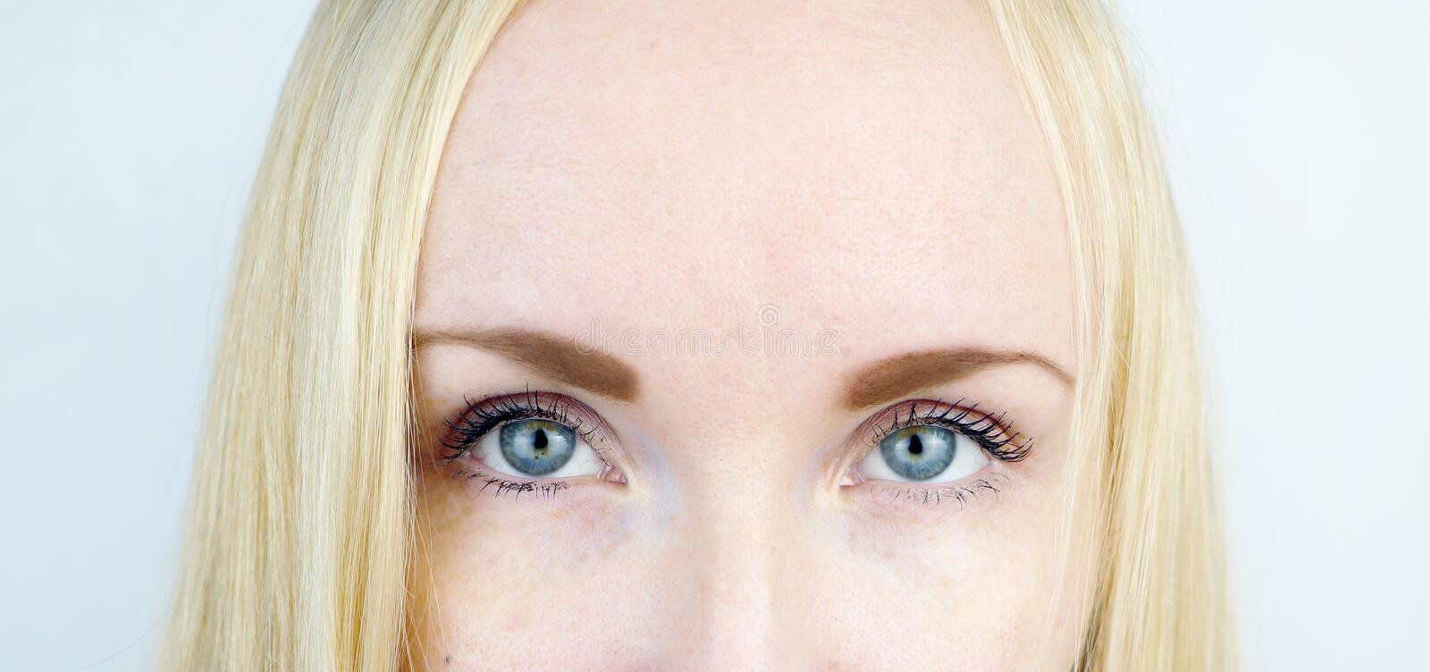 Green eyes of a beautiful girl. White background. Blonde freckles royalty free stock image