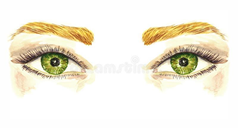 Green eyes with natural soft makeup, soft pastel eyeshadows, mascara, brown eyebrows, hand painted watercolor fashion illustration vector illustration