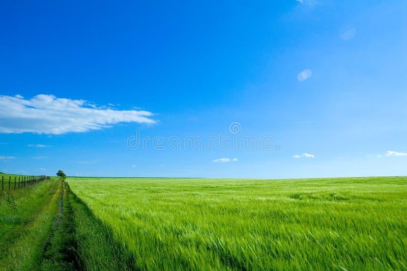 green för 6 fält royaltyfri fotografi
