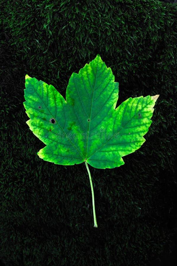 Free Green Fallen Leaf On Stock Image - 16093711