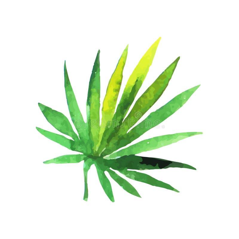 Green fan palm leaf hand drawn watercolor vector Illustration royalty free illustration