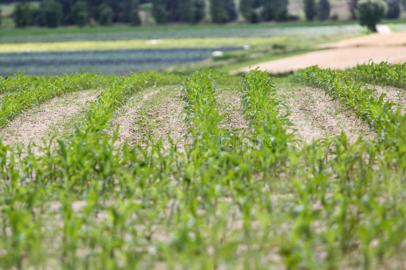 Download Green farm field stock photo. Image of nature, land, brown - 26515160