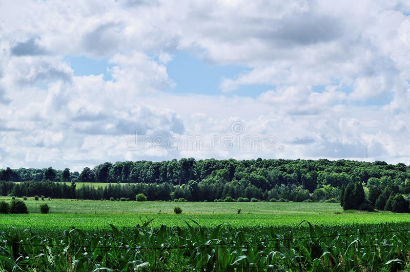 Green farm field and forestation with sky and clouds stock photo