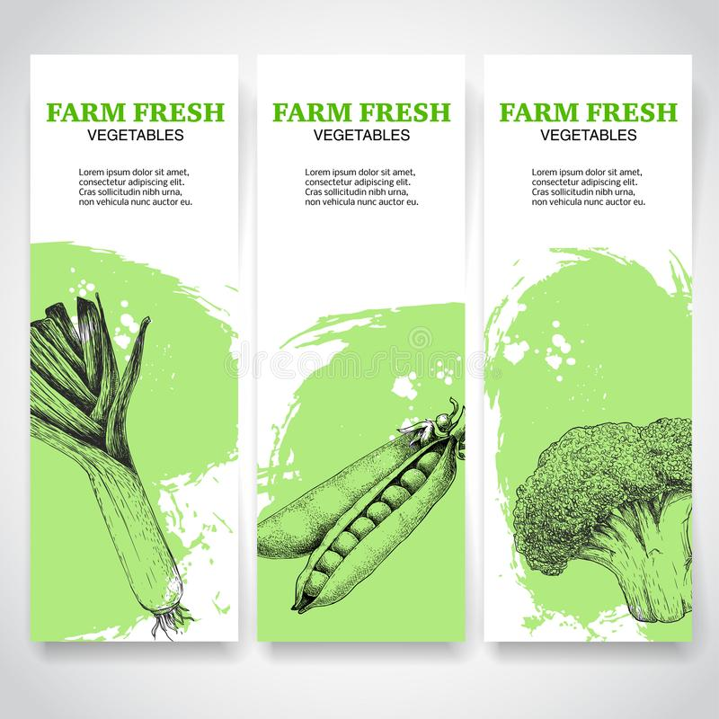 Green farm fresh vegetables banners. Leek, peas and broccoli. Sketch hand drawn veggies on green watercolor backgrounds. stock illustration