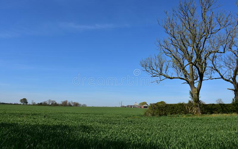 Green Farmland and Crops in Northern England. Stunning green lush farmland and crops in Nothern England stock photos
